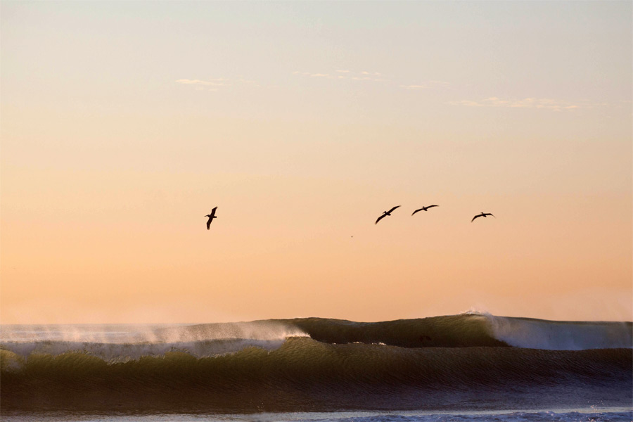 waves pelicans flying