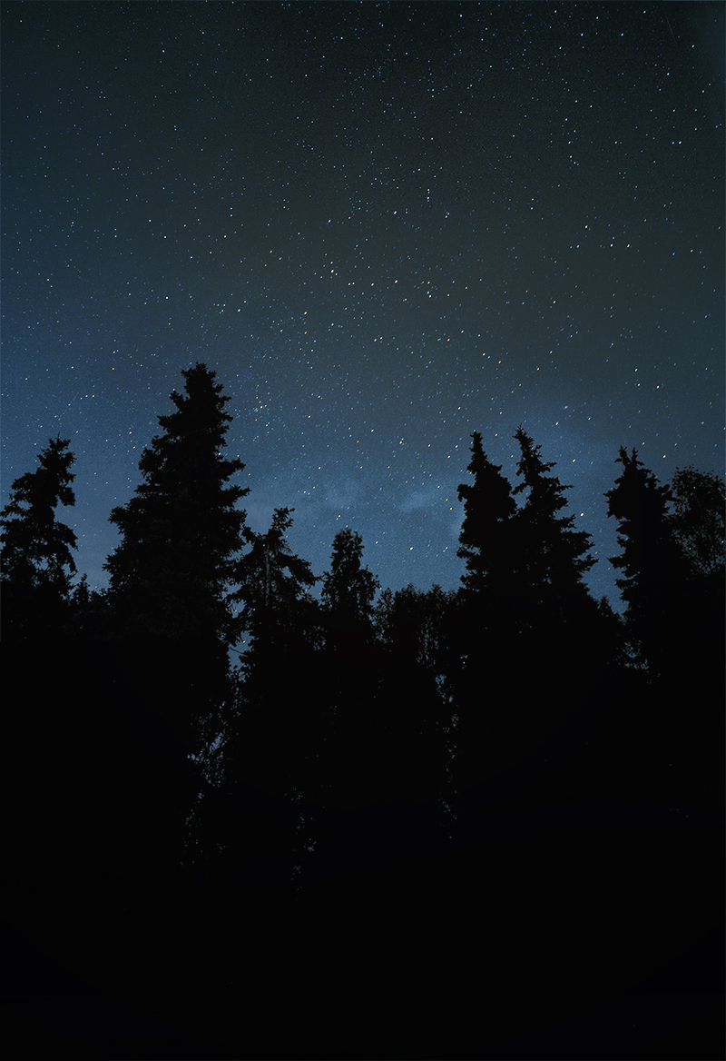 starry-forest-web